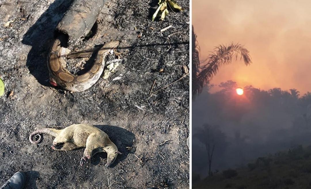 Cobra jibóia e tamanduá são encontrados mortos por bombeiros em queimada no Acre