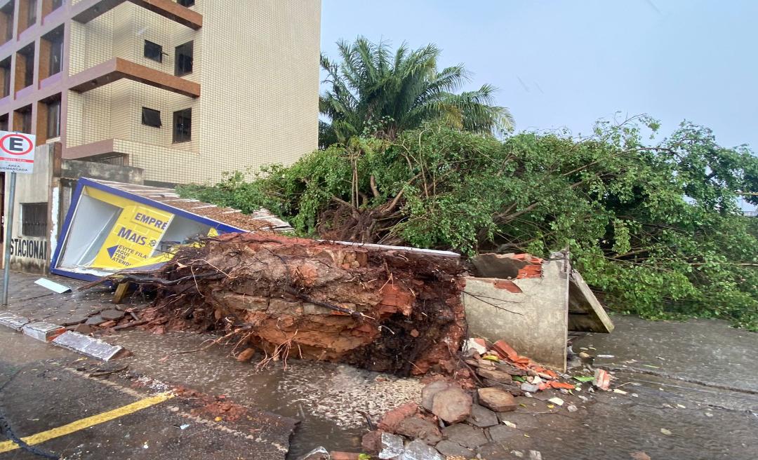 Vento forte derruba árvore sobre muro e correspondente do Banco do Brasil em Rio Branco